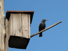 Free Starling-house Stock Photos - 19552293