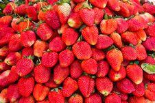 Free Fresh Strawberry Stock Images - 19553284