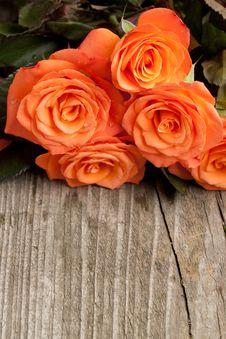 Free Orange Roses Stock Photography - 19553652