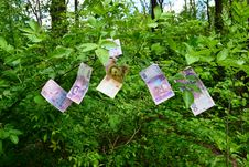 Free Money Grows On Trees Royalty Free Stock Photo - 19553695