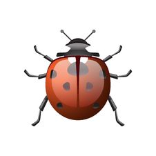 Free Ladybird Royalty Free Stock Images - 19554129