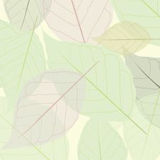 Free Postcard With Leaves Stock Photo - 19554350