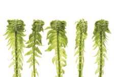 Free Five Ferns In Row Stock Images - 19555134
