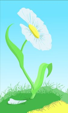 Free White Flower On The Green Loan Royalty Free Stock Image - 19556236