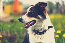 Adorable Portrait Of A Beautiful Dog Royalty Free Stock Photo