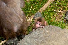 Free Baby Monkey Stock Photo - 19558330