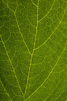 Free Green Leaf Stock Photos - 19559713