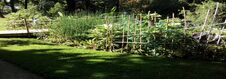 Free Garden  Panorama In Summer. Stock Images - 195518124