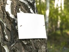 Free Paper_tree Stock Photography - 19566242