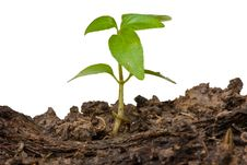 Free Little Tree Rise From The Ground Isolated Stock Images - 19567434
