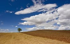 Lonely Tree In The Field Stock Photography