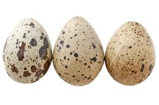 Free Quail Eggs Stock Photos - 19568273