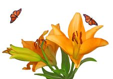 Free Bright Flowers With Monarch Butterfly Stock Photos - 19568363