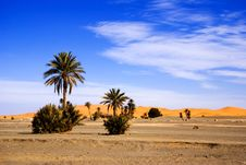 Free Dunes Of Sahara An Palm Trees Royalty Free Stock Image - 19568966