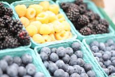 Free Berries Stock Photos - 19569063