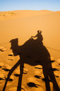 Free Camel Shadow Royalty Free Stock Photos - 19570018