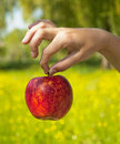 Free Red Apple In Hand Stock Photos - 19572463