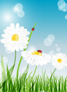 Free Summer Banners With Daisy And Ladybugs Royalty Free Stock Photos - 19573448