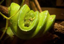Free Green Snake Stock Image - 19572631