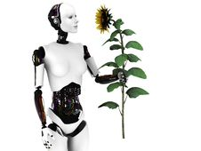 Free Robot Woman Holding A Sunflower. Stock Photos - 19572633
