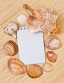 Free Notebook And Cockleshell Royalty Free Stock Images - 19572829