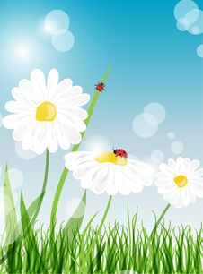 Summer Banners With Daisy And Ladybugs Royalty Free Stock Photos