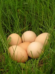Free Chicken Eggs  In The Grass Stock Images - 19573724