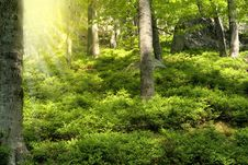 Free Spring Forest Stock Image - 19574591