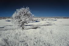 Free Landscape In The Infrared Royalty Free Stock Image - 19574986