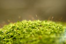 Moss And Lichen Stock Photo