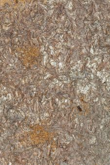 Free Damage On Pine After Bark Borers Royalty Free Stock Photo - 19579045