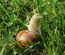 Free Snail Stock Photos - 19579303