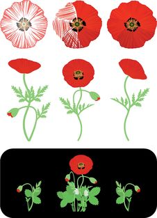 Free Poppies Stock Image - 19579561