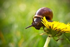 Snail. Stock Photo