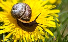 Free Snail. Stock Photography - 19579612