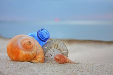 Free Seashells With Bottle On The Beach Royalty Free Stock Image - 19579786
