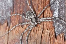Free Wolf Spider On Burnt Coal Royalty Free Stock Image - 19579926