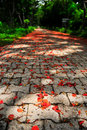 Free Flower On The Road Royalty Free Stock Photo - 19580805