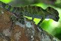 Free Lizard Stock Photos - 19585853