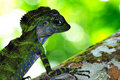 Free Lizard Stock Images - 19585934