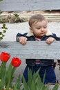 Free Garden Baby Stock Photos - 19588623