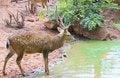 Free Deer Stock Photos - 19589823