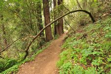 Dirt Trail Through The Woods With Bushes Royalty Free Stock Photography