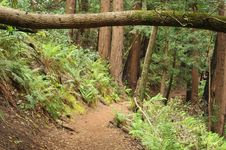 Free Dirt Trail Through The Woods With Bushes Stock Photo - 19580050