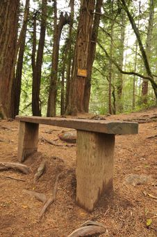 Free Wooden Bench On A Trail In The Woods Royalty Free Stock Images - 19580059