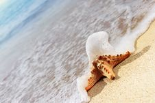 Free Starfish On Beach Royalty Free Stock Photos - 19580478