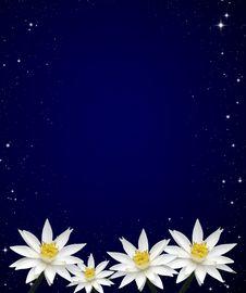 Free Isolated Lotus White Night Sky Royalty Free Stock Image - 19581286