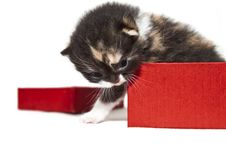 Free Little Kitty From Box Stock Images - 19581714