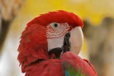 Free Parrot Stock Image - 19582271