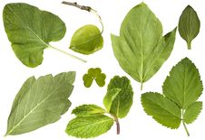 Free Set Of Green Leaves Royalty Free Stock Images - 19582879